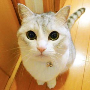 猫の顔×4!
