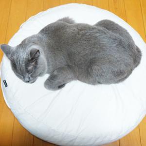 寝てる時でも楽しいのが猫!