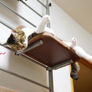 猫との闘いはまだまだつづく!