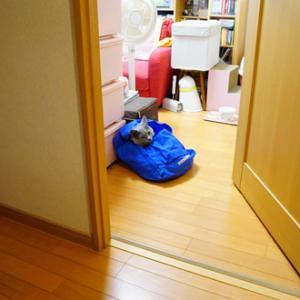 オーラを消す猫・放つ猫
