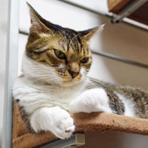 日曜日の猫猫日記