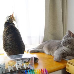 土曜日の猫猫日記