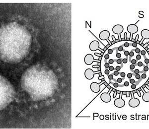 ウィルスは宿主をまたいで感染した場合に変異して狂暴になることも。