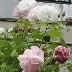 月参りで妻と母に感謝・・(^_-)-☆