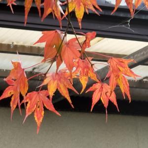 奈良県(大和)で最後のお祭りは?・・(^_-)-☆