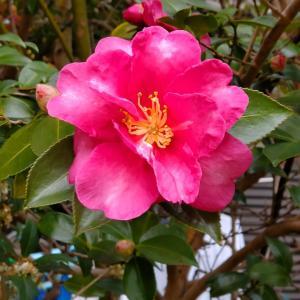 「桜を見る会」で日本の進路は?・・(^_^)