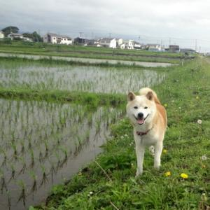 ☆~向日葵が咲いてたよ~☆