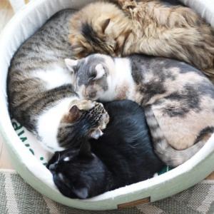 猫の日スペシャルな日