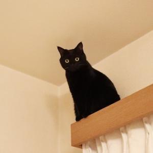 さくらの日を忘れてた~黒猫、夜の大ジャンプ