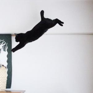 またまた黒猫サクラのジャンプ総集編