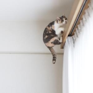 7歳の猫より10歳の猫の方がよく飛んでます(*^m^)