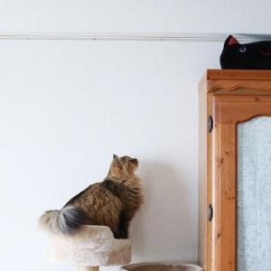 7歳のずんぐりむっくりな猫も飛ぶ
