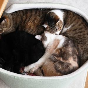 愛用した猫ベッドに感謝でお別れ