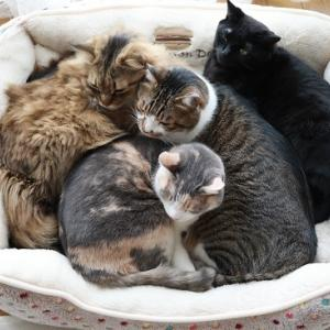 新しい猫ベッドの定員は?