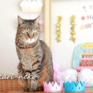 猫たち11歳と8歳になりました