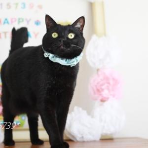 黒猫にシュシュとカーネーション