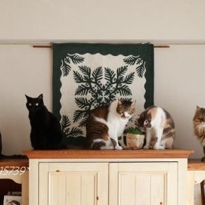 6月の5猫集合写真