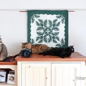 7月の5猫集合写真