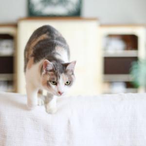ナナコの日に飛んでくる猫