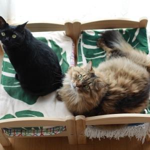 この頃のIKEAの猫ベッド