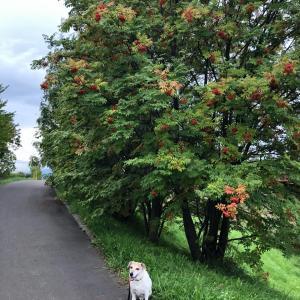 実家と散歩