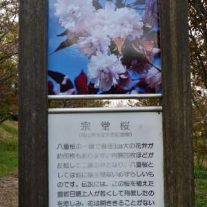 宗堂桜の里