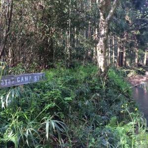 キャンプ場の架け橋