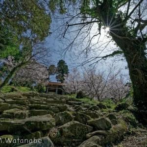 常楽寺の春