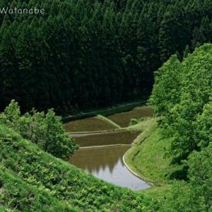 谷間の水田