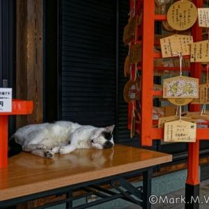 猫のいる神社