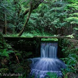 山吹水源-小さな滝