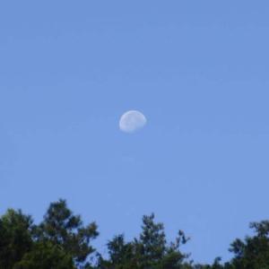 山の上に見えた、朝のお月様。涼しすぎる朝。おいしい足なのか?