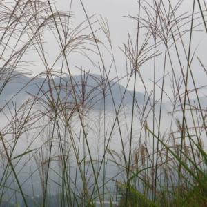 山の中腹に雲が漂う。ジメーっとした一日。ピロピロキャッチ。
