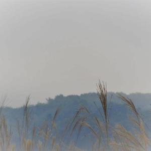 霧が晴れると今日も蒸し暑い日。
