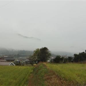濃霧で寒い朝。スヌーピーのおもちゃでジャンプ、ハラハラ。