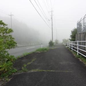 すごい霧の朝。早朝散歩。久しぶりに廊下でスリッパ「持ってきて」