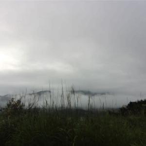 稲刈りが終わった田んぼ。まだ雲の中のよう。廊下で「スリッパ持ってきて」