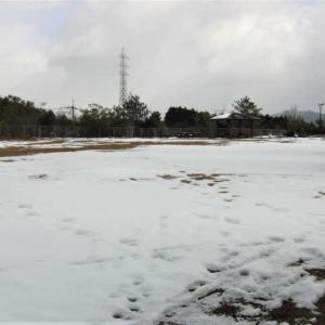 今日からまた寒くなって雪が降りました。公園へ散歩、足跡。スリッパで「持ってきて」