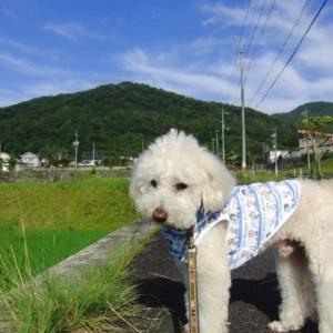 朝は早くから散歩に。きれいな青空と山の緑。スリッパで「持ってきて」