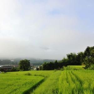 今朝も早起きして、朝の散歩。スリッパで「持ってきて」