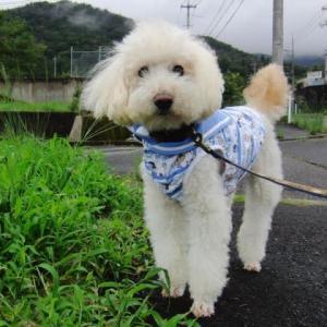 今日は台風の影響で風雨。夕方に散歩。催促がすごい。スヌーピーのおもちゃで「持ってきて」、ゴロン。