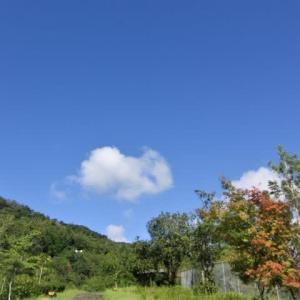 今日は朝からいい天気。変わった雲。スヌーピーのおもちゃで「持ってきて」