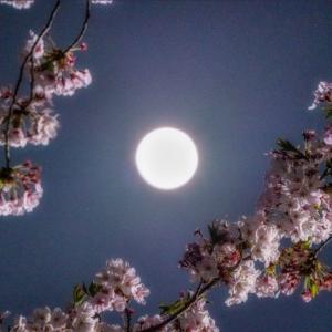 今宵満月。スーパーピンクム〜ン