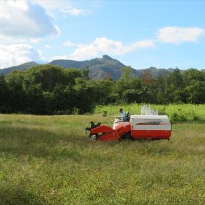蕎麦の刈り取りとヨウシュヤマゴボウ