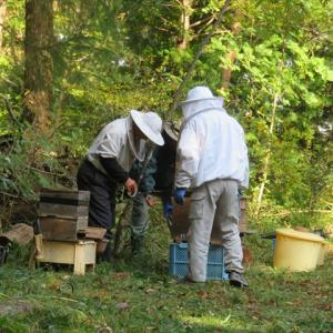 ミツバチの引越し