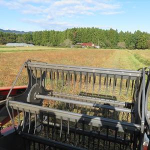 今日も蕎麦の刈り取り
