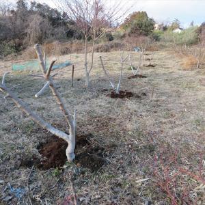 果樹の追肥