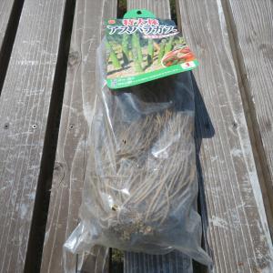 アスパラガスの植え付け・インゲンの種蒔き