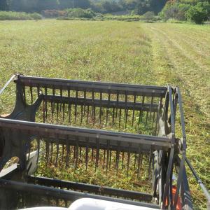 今日も蕎麦刈