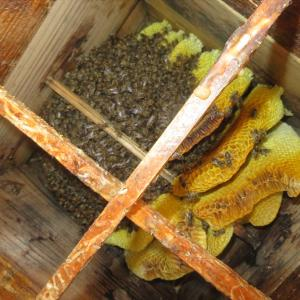 ミツバチの内検
